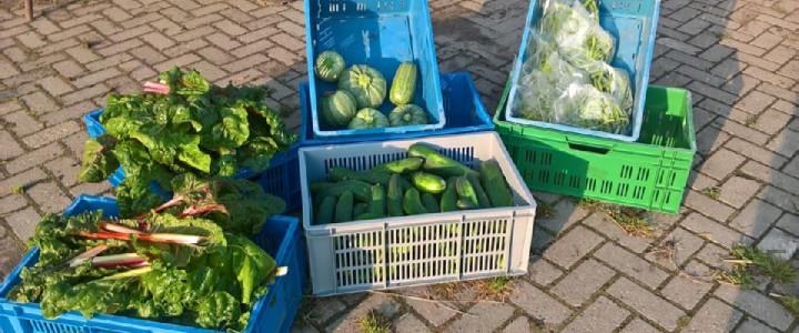 Doe mee word lid - de oogst is altijd op donderdagavond.