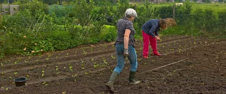 Het uitplanten van de jonge groenten (© André Wonink).