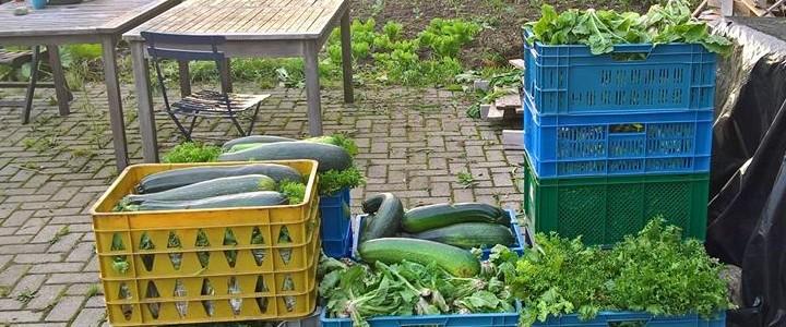 Kratten vol vers geoogste groenten voor de Voedselbank Midden Twente.
