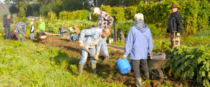 Voor de moestuinplanten in het algemene gedeelte hebben de leden van deze vereniging een gezamenlijke zorgplicht (© Nico Stroes).