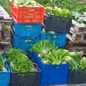 De biologische moestuin vereniging: oogst voor de Voedselbank