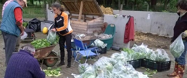 Leden van de vereniging verpakken de geoogste groenten voor levering aan de Voedselbank Midden Twente.
