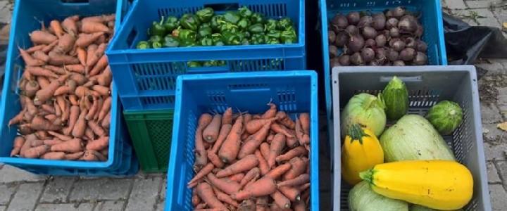 Kratten met opbrengst van diverse groenten van de voedseltuin.