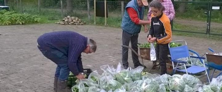 Bladgroenten - de andijvie moeten wij in plastic verpakt bij de Voedselbank aanleveren.