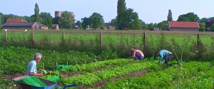 Kropsla oogsten in de voedseltuin