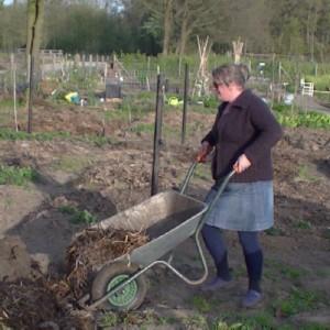 Marga brengt de paardenmest op de tuin.