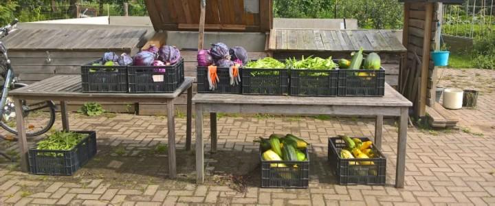 Een mooie oogst (© André Wonink).