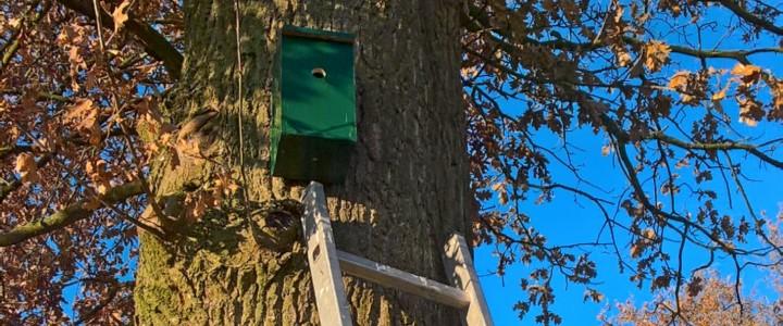 Vogelhuisje ophangen in een eik (© André Wonink)